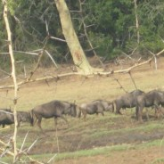 Educational Tour to Ndumo Game Reserve